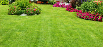 Grass mowing and yard maintenance
